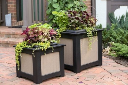 planters_917785464